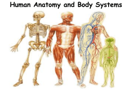 Human Body Systems- Powerpoint