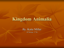 Kingdom Animalia - North Community High School