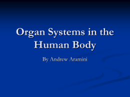 Organ Systems in the Human Body