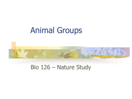 Bio 126 Animal Groups - Diablo Valley College