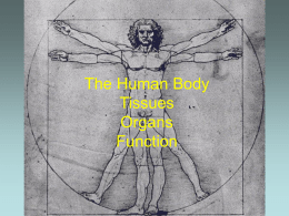 The Human Body Tissues Organs Function
