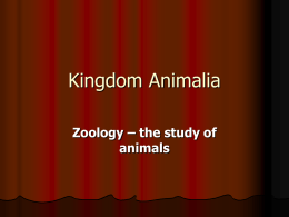 Kingdom Animalia - Corner Brook Regional High
