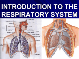 ANATOMY OF THE RESPIRATORY SYSTEM (OVERVIEW)