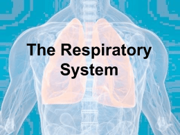 The Respiratory System - Education Service Center, Region 2