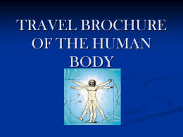 TRAVEL BROCHURE OF THE HUMAN BODY - Whitman