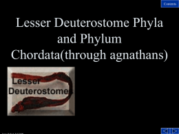 Lesser Deuterostome Phyla and Invertebrate members of