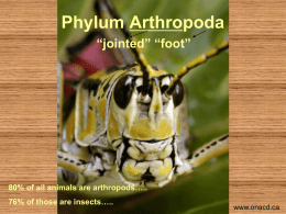 Phylum Arthropoda - Richmond School District