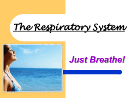 The Respiratory System - mrbemrose / FrontPage