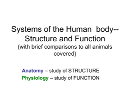 Chapter 40 – Intro to Animal Structure and Function