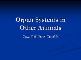 Organ Systems in Other Animals
