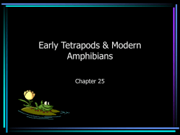 Early Tetrapods & Modern Amphibians