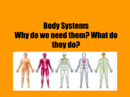 Body Systems Why do we need them? What do they do?