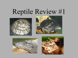 Reptile Review #1 - local.brookings.k12.sd.us