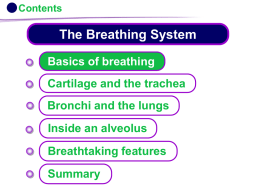 KS4 The Breathing System