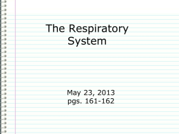 Respiratory System Alveoli 7. Air enters lungs, main organs of