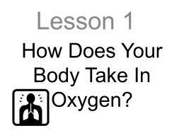 How Does Your Body Take In Oxygen?