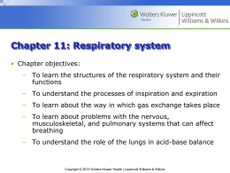 Chapter 11: Respiratory system