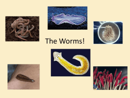 The Worms! - Conackamack Middle School