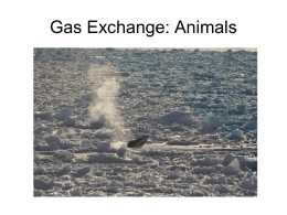 Gas Exchange in Plants and Animals – Chapters 38 & 49