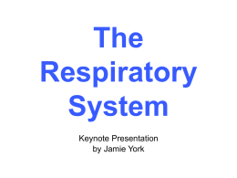 Respiratory System - University of St. Thomas