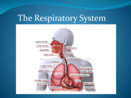 The Respiratory System 2011