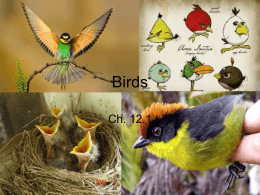 Ch. 12.1 Intro to Birds