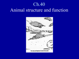 PowerPoint Presentation - Ch.40 Animal structure and function