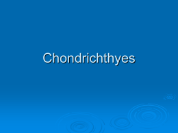 Chondrichthyes - Mayfield City Schools