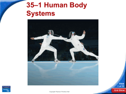 Body Systems Notes