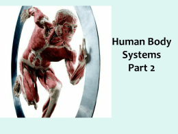 Human Body Systems Part 2