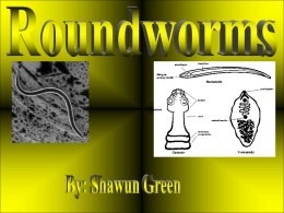 Roundworms- Powerpoint