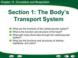 Chapter 14 Circulation and Respiration The Cardiovascular System