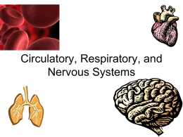 Circulatory, Respiratory, and Nervous Systems