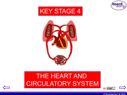 heart and circulatory system