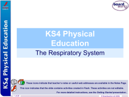 2. The Respiratory System - School