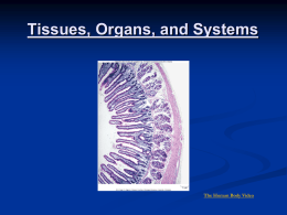Tissues, Organs and Systems