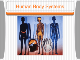 Human Body Systems Power Point