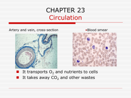 CHAPTER 23 Circulation