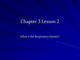 Chapter 3 Lesson 2