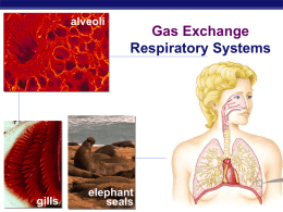 Gas Exchange print ppt