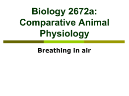 Biology 272b: Comparative Animal Physiology