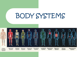 File body system power point
