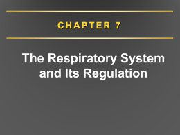 Chapter 7. Respiratory System and Regulation