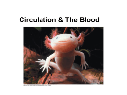 1. Circulation & The Blood