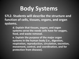 Body Systems Booklet