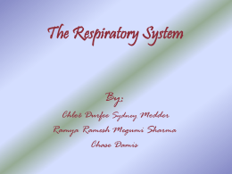 The Respiratory System Larynx (Voice Box) - Course