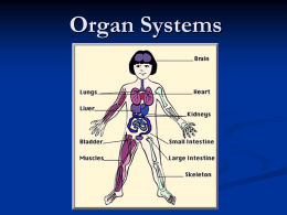 Organ Systems - BEHS Science