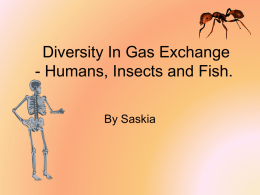 diversity_in_gas_exchange