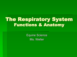 The Respiratory System Functions & Anatomy