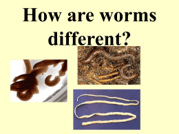 kinds of worms - local.brookings.k12.sd.us